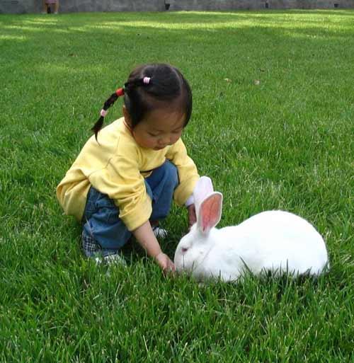 小女孩与大白兔