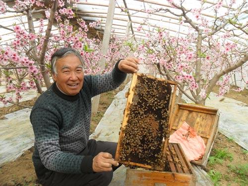 养蜂人正在大棚查看蜜蜂