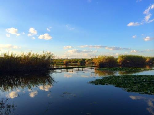 五甲塘湿地的美