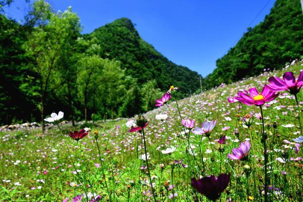 百里杜鹃是国家aaaa级旅游景区,国家森林公园,省级风景名胜区和自然