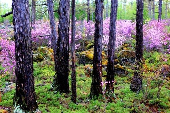 满目春色隐匿林中