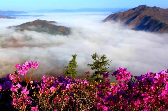 春之胜境如梦如幻