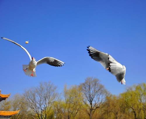 纯净天空下自由和谐