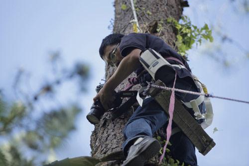 导演爬上60米大树拍摄