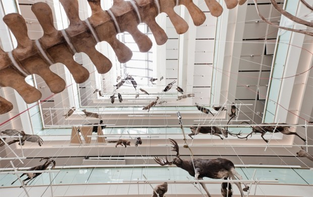 "The exhibition, named ""From the glacier to the forest"", has the animals displayed vertically in the central hall, in up to five different layers."