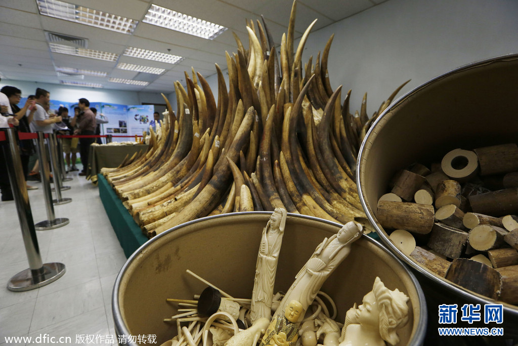 Hong Kong has sent a strong signal in its fight against the illegal ivory trade by burning confiscated elephant tusks. The batch destroyed is the first of a stockpile of 30 tons set to be burned within two years.