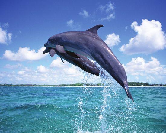 在水里游的动物