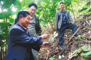 高德荣指导农户掌握重楼种植、管理的正确方法。