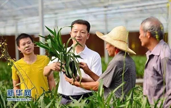 廖俊波(左二)在县东涧花卉基地听取村民和返乡企业主种植花卉的情况介绍(2015年6月27日摄)。