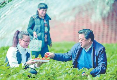 付华廷(右)正在与采摘草莓的城里游客交谈。
