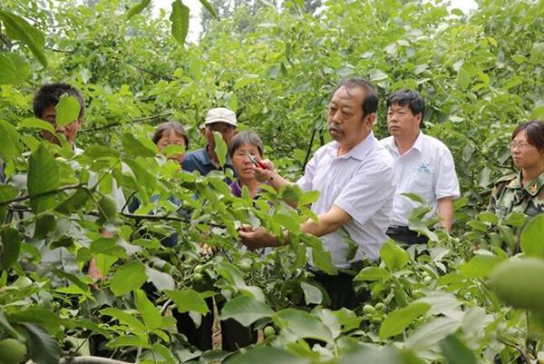图为李保国在田间为农户讲解核桃栽培实用技术。
