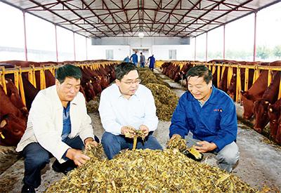 西北农林科技大学教授昝林森指导企业开展秦川牛科学养殖