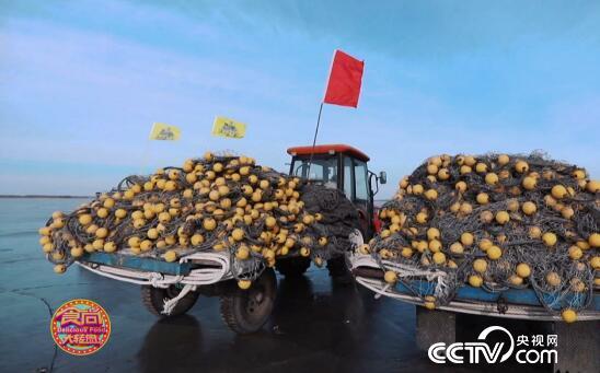 食尚大转盘:卧龙湖冬捕 冬天里的一把火 3月10日
