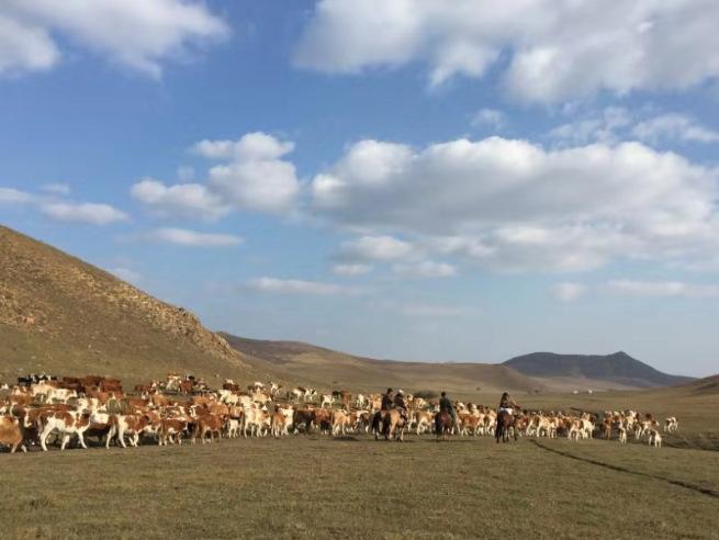 这是玛拉沁艾力养牛专业合作社的养殖基地。