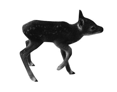 原标题:   獐子,别名河麂,是国家二级保护动物,民间流传喝奶的獐子胃