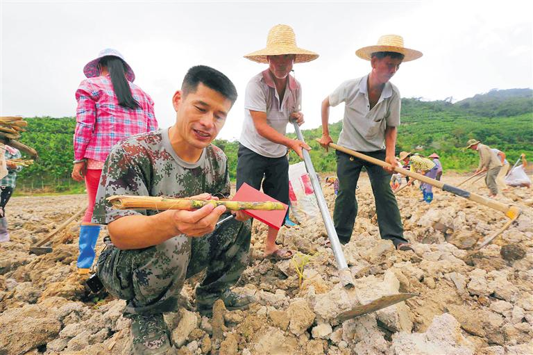 圖為隋耀達在田地里與村民一起勞動