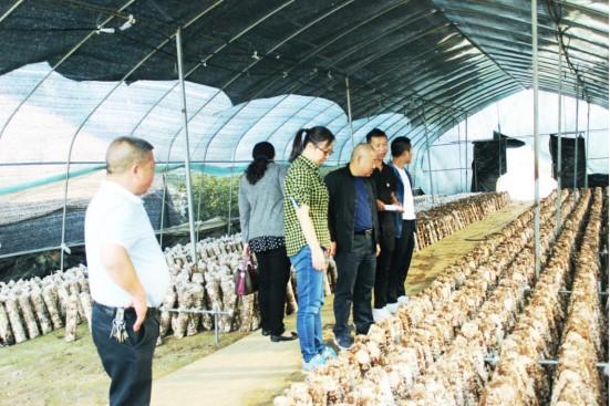 沙文镇在田间地头开展主题教育。