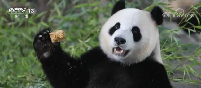 大熊猫嘉嘉庆生 园方为其子征名