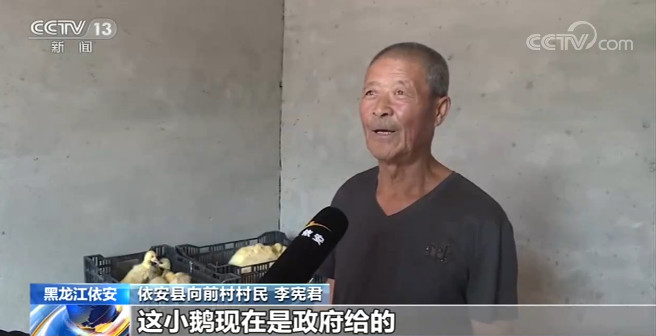 黑龙江依安:构建大鹅产业扶贫模式 助贫困户脱贫