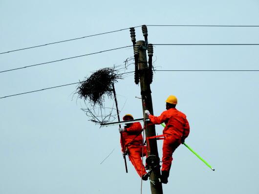记者李振报道电力巡线工摘除电线杆上的鸟窝。    本报通讯员 段德咏 郭轶敏     本 报 记 者 李 振   喜鹊是吉祥的象征,喜鹊进家门更被中国人认为是好兆头。不过对于室外的电力线路和设施,喜鹊巢却成为危险的定时炸弹喜鹊巢里的树枝、金属丝一旦接触到导线就会引起电力事故。为此,见鸟就赶、见窝就拆成了电力线路巡线工人重要的工作之一。不过在垦利,这样的场景或许将不复存在。住进了架设在电线杆上的安全鸟巢,黄河入海口的喜鹊们终于能与电力设施和谐共处了。   碧绿的野大豆、婆娑的柽柳、泛红的碱蓬