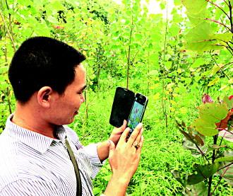 返乡农民工投入50万元植树成林