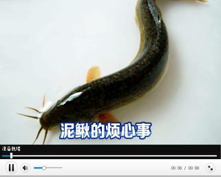 户带来了麻烦;泥鳅苗顺利孵化了,却又发生了蹊跷事,泥鳅到底为