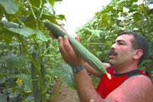 Poisoned Spanish cucumbers kill 9, sicken almost 300