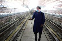 3 more cases of H7N9 found in China, research for vaccine starts