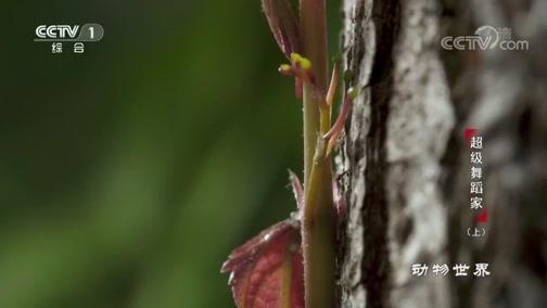[动物世界]奇特的运动方式 植物也是出色的舞者