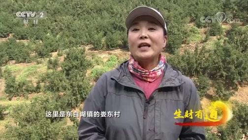 《生财有道》 20191227 浙江诸暨:香榧产业链 富民特产亮名片