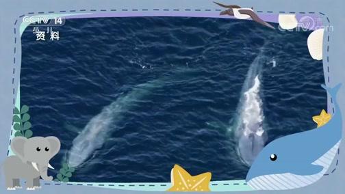 [小小智慧树]Di Di Du:蓝鲸 大象 信天翁