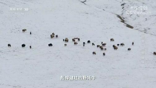 [地理·中国]考察队员们遇到了一些转山的藏族牧民