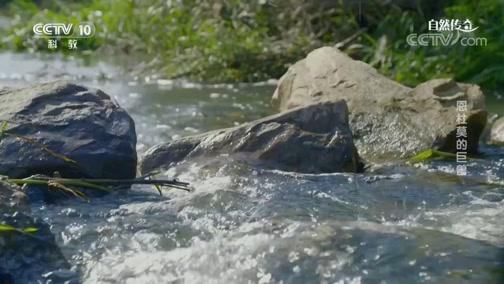 《自然传奇》 20200120 恩杜莫的巨兽