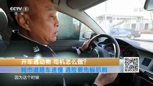 [生活提示]城市道路车速慢 遇险要先躲后刹