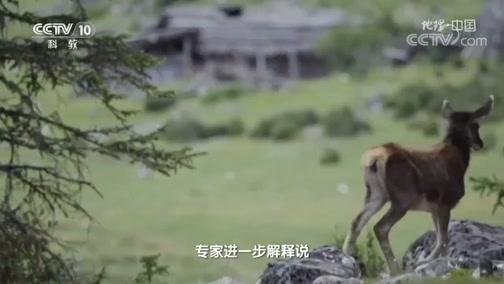 [地理·中国]白唇鹿是青藏高原特有种