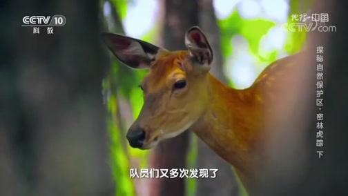[地理·中国]专家在去往核心区域的路上发现狐狸粪