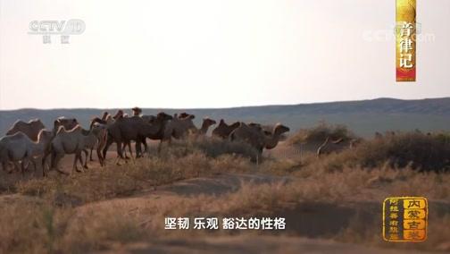 [中国影像方志]阿拉善右旗篇 音律记