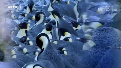 《人与自然》 20200329 海鸟的家园