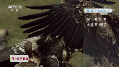 《自然传奇》 20200331 清道夫秃鹫
