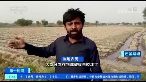 [第一时间]蝗虫肆虐南亚 粮食安全受威胁