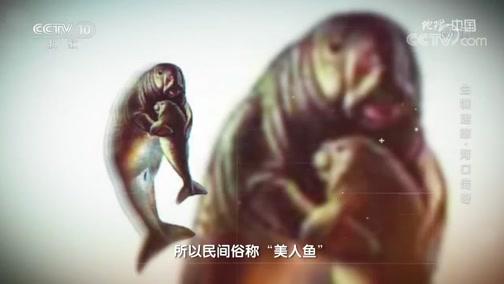 """[地理·中国]被民间誉为""""美人鱼""""的儒艮"""