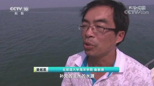 《地理·中国》 20200704 生境迷踪·河口传奇