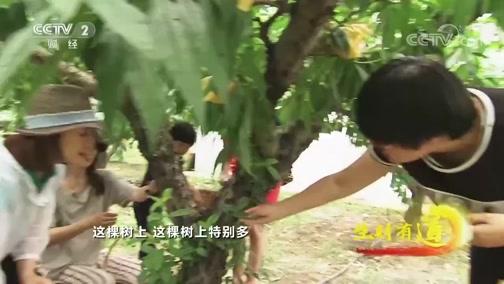 [生财有道]富有特色的农家乐在阳山蓬勃兴起