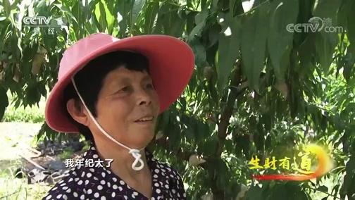 《生财有道》 20200707 夏日经济系列:水蜜桃成就甜蜜的事业