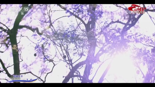 [中国音乐电视]歌曲《蓝楹花开》 演唱:王斌