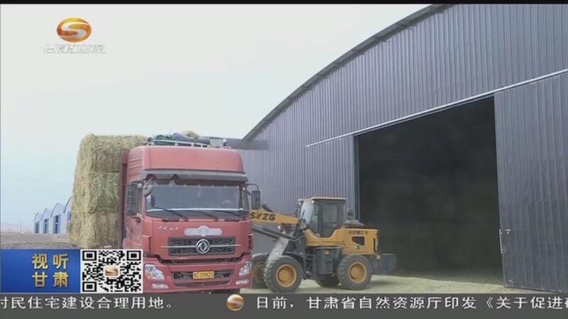 [必威体育下载ios新闻]山丹:27万亩燕麦草丰收