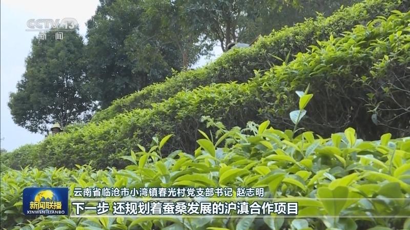 上海广东协作帮扶 云南脱贫攻坚显成效