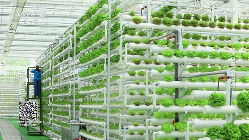 《创新进行时》 20210428 水培蔬菜有奇招