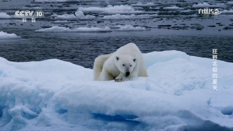 《自然传奇》 20210604 狂野北极的夏天