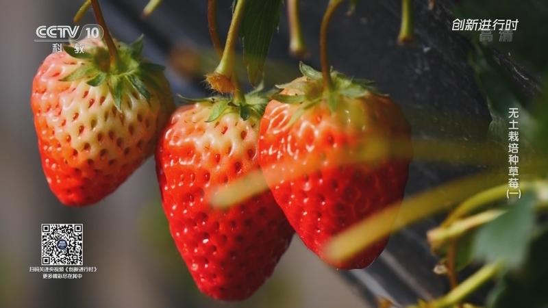 《创新进行时》 20210625 无土栽培种草莓(一)